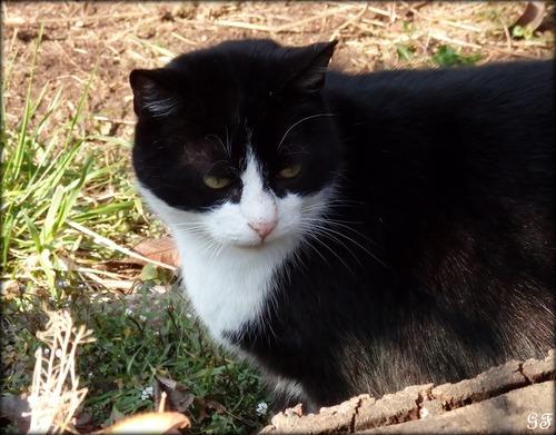 Le chat Lulu s'est fait quelques copains.