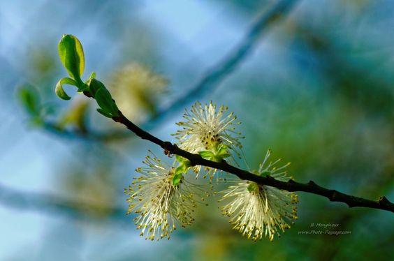 Fleurs et bourgeons - [Images de printemps]