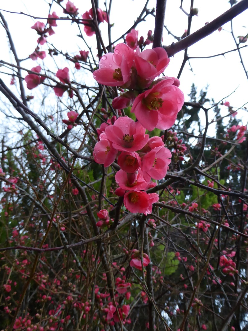Interlude floral avec ce qui fleurit en ce moment!