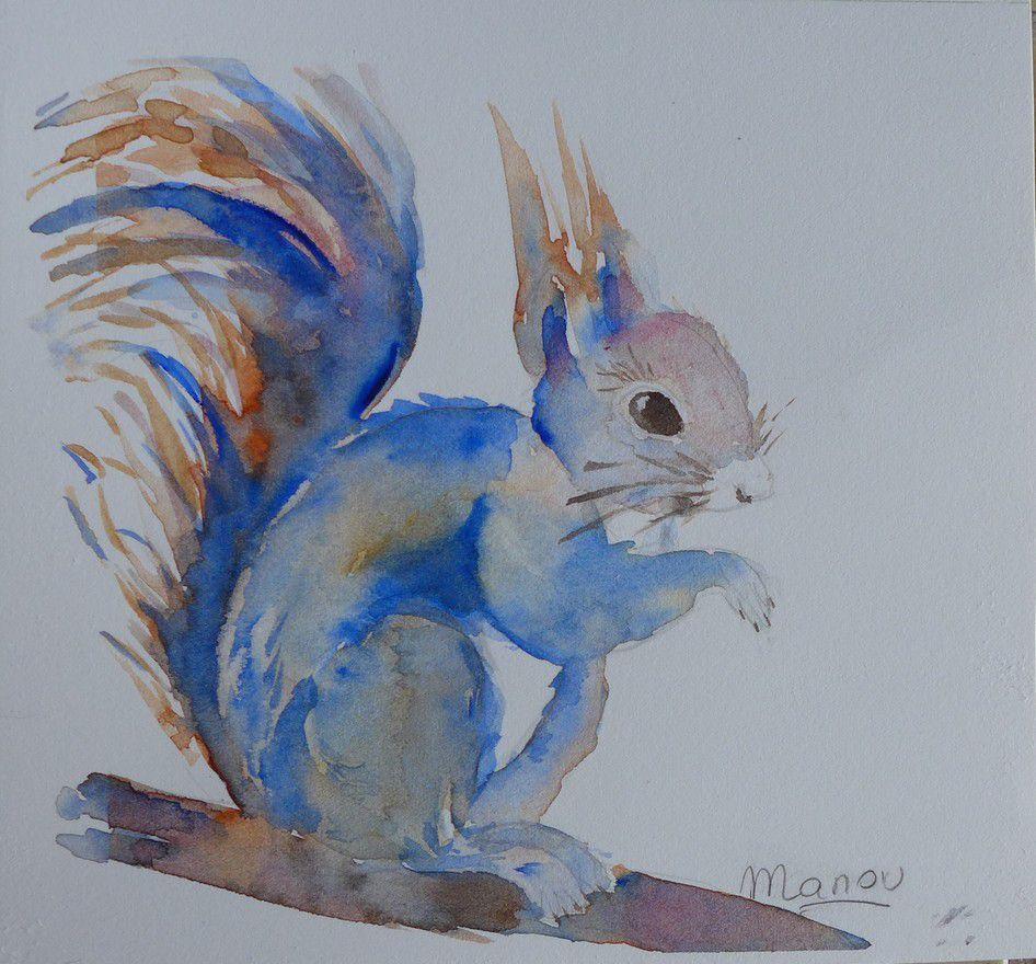 L'écureuil bleu de Manou...