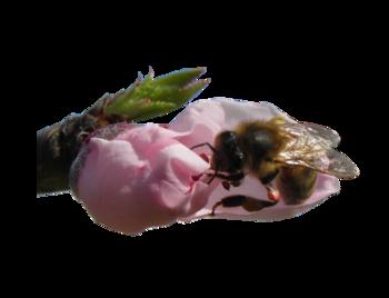 Tubes Guêpes et Abeilles