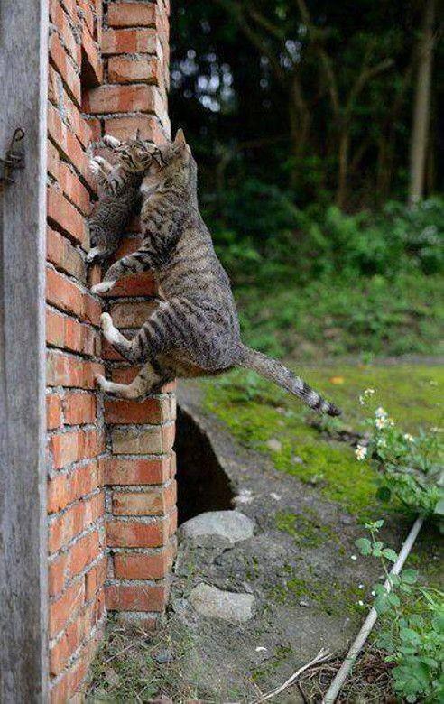 Spider maman! Spider maman!! Elle monte au plafond!