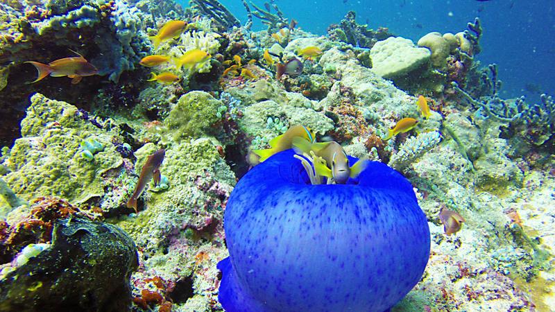 Nouveau bonjour depuis les Iles Maldives