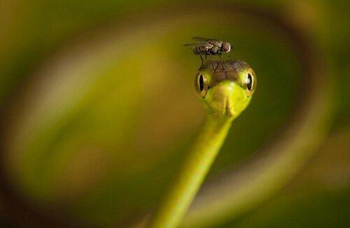 Photos hallucinantes qui capturent des moments extraordinaires de la nature sauvage.