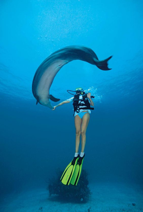 Swim With Dolphins http://www.sport-decouverte.com/nager-avec-les-dauphins.html