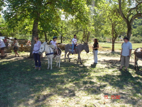 A dos d'ânes 2010