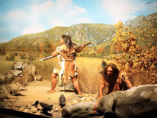 Documentaires sur la préhistoire