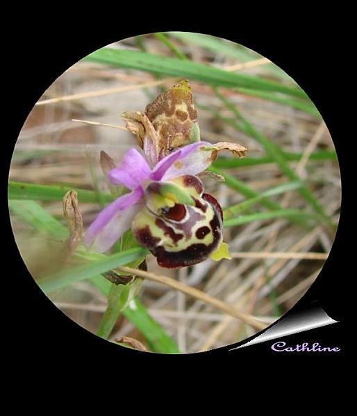 orchidee-en-medaillon--2.jpg