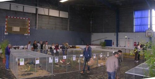 - Expo/bourse aux oiseaux et aux volailles à  vannes le 4 octobre 2015