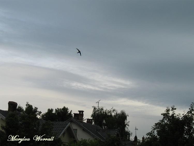 Ciel d'Alsace 221
