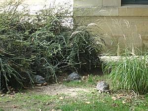 Jardin des plantes 007