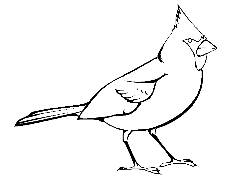 Fred Bird Of The St Louis Cardinals Free Coloring Pages Stl Cardinals Coloring Pages