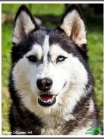 Mishka (4 ans)