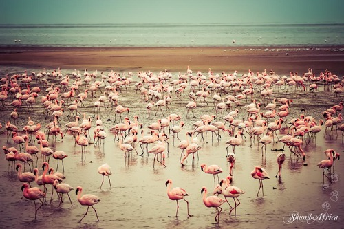 Walvis Bay birdlife