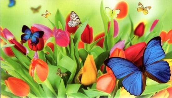 papillon  3216