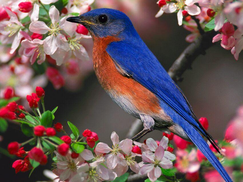 10 images d'Oiseaux
