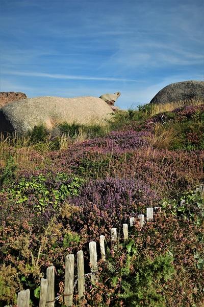 2016.08.13 Côte Granit Rose, Pointe Pors Hir (1)