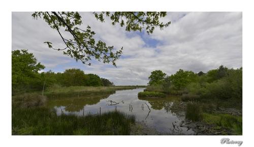 La réserve du Teich