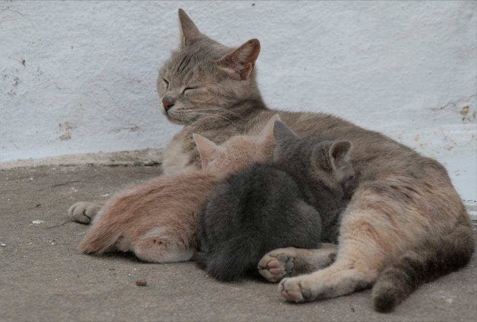 chats grecs photo
