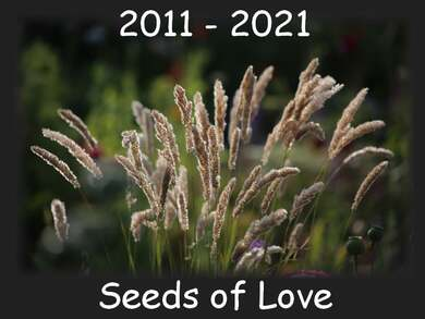 Seeds of Love: Ma participation 2020