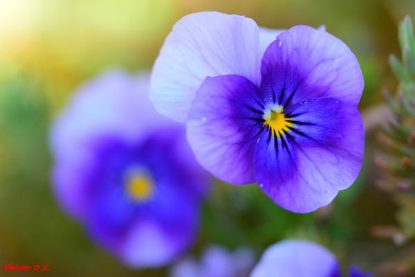 De superbes fleurs photographiées par D.S.
