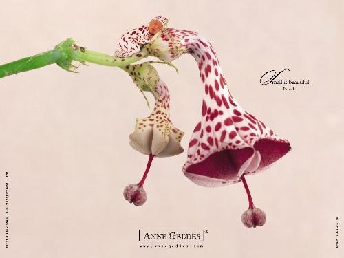 Anne Geddes nouveaux nés animaux