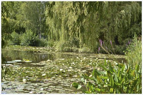 - Un étang paradisiaque en Bourgogne