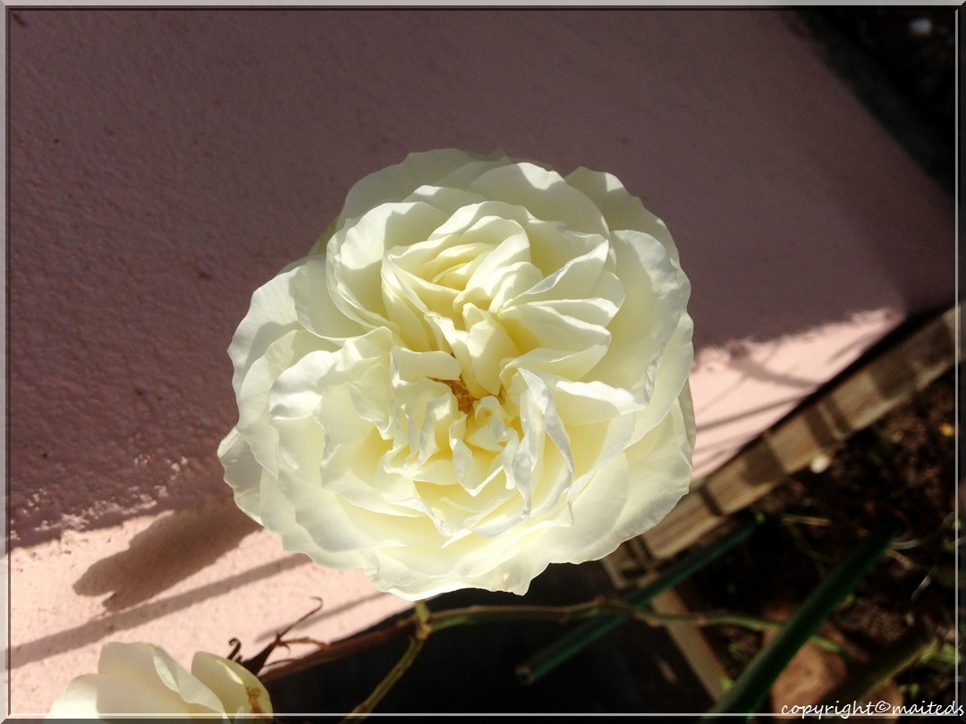 Fleurs pour notre ami Jacques