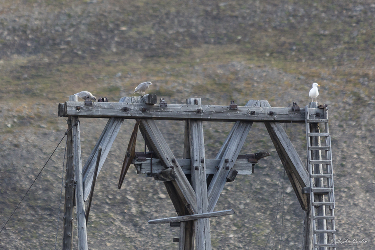 Les dangers de l'arctique... ou saloperie de goéland