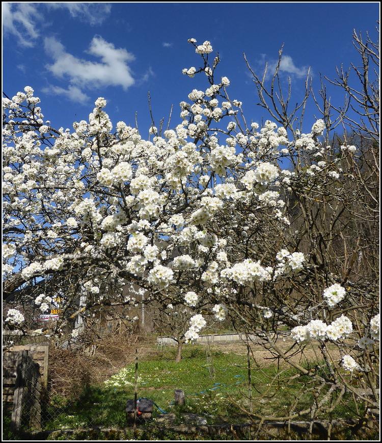 Un peu de printemps chez moi !