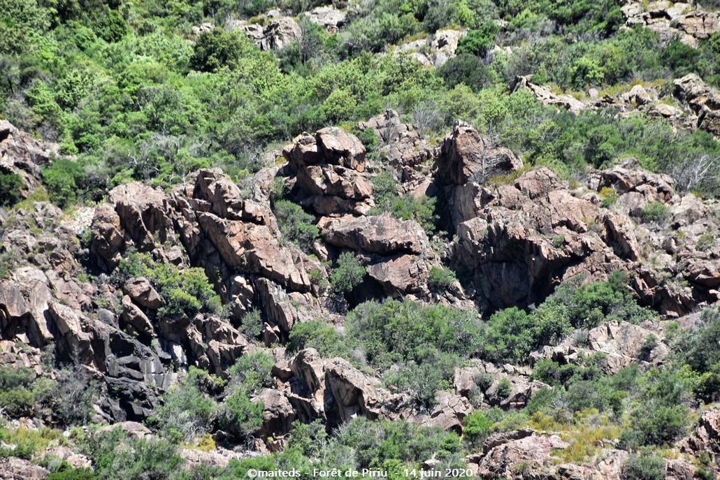 Sentier des mésanges bleues - Forêt de Piriu - Corse