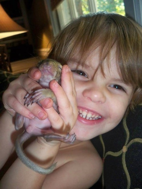 (-*♥*-) Un écureuil revient régulièrement rendre visite à la famille qui lui a sauvé la vie 8 ans plus tôt.