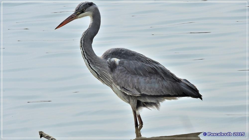 Réserve ornithologique du Teich (mars 2015) - 5/8