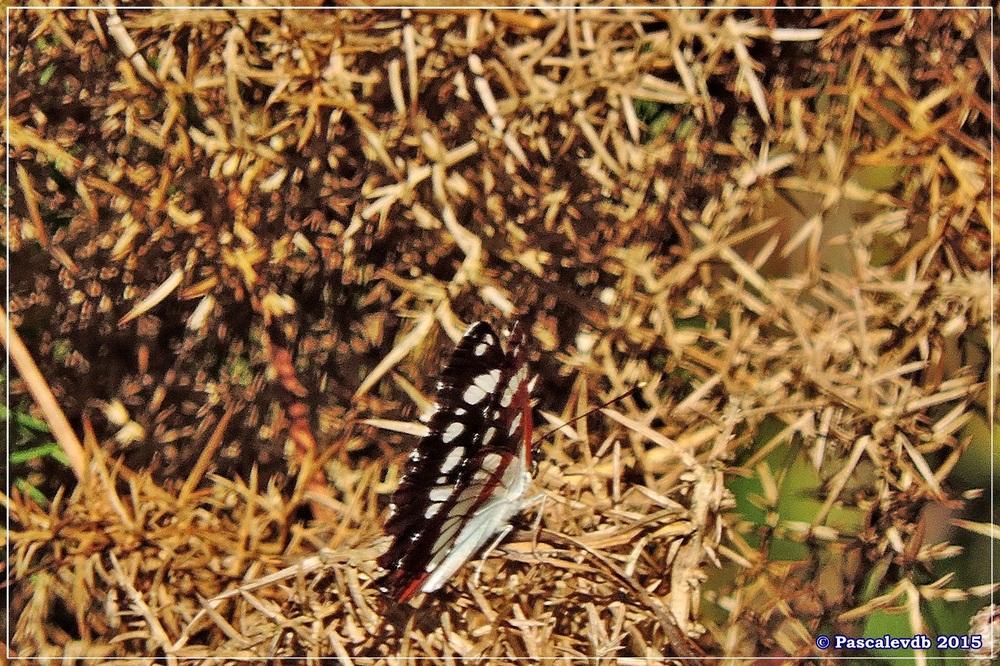 L'étang de Surgenne - Septembre 2015 - 9/10
