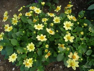 Fleurs d'automne (34)
