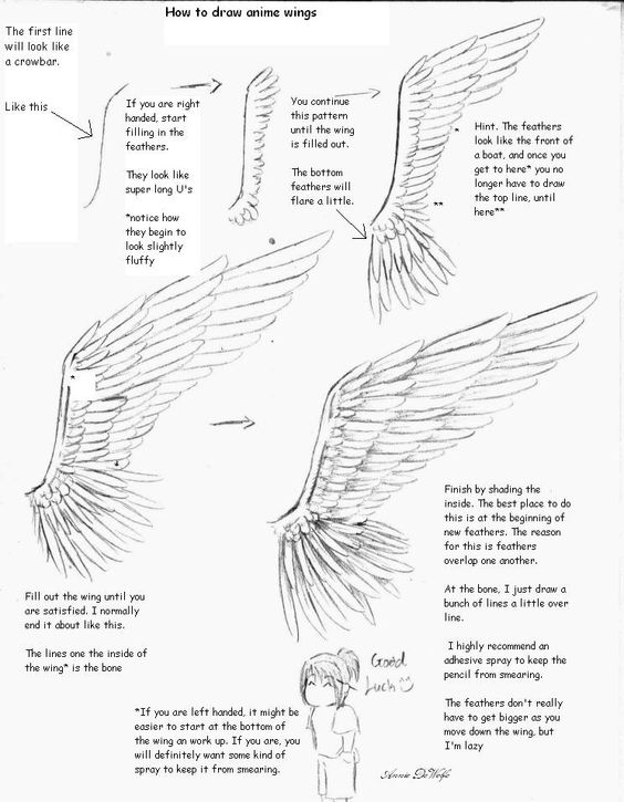 Today's Drawing Class 101: Drawing wings | Anime drawing tutorial on wings: