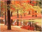 N°53 : L'automne