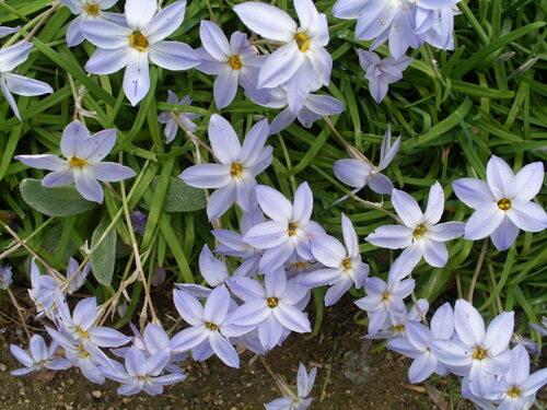 le printemps au parc Citroen