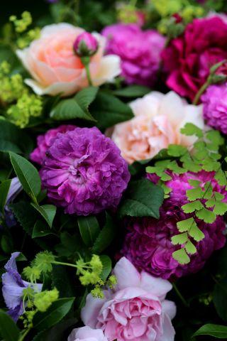 Medicis & Roses