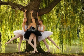 1350610808-the-moscow-ballet-presents-swan-lake-in-dublin_1531722