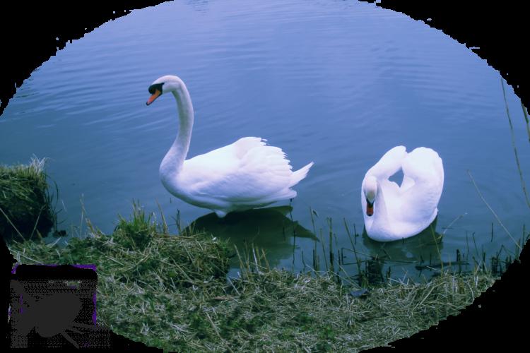 Animaux étang 2