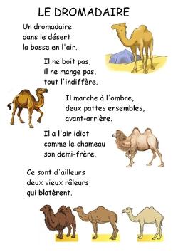 Comptines et chanson pour chameaux et dromadaires