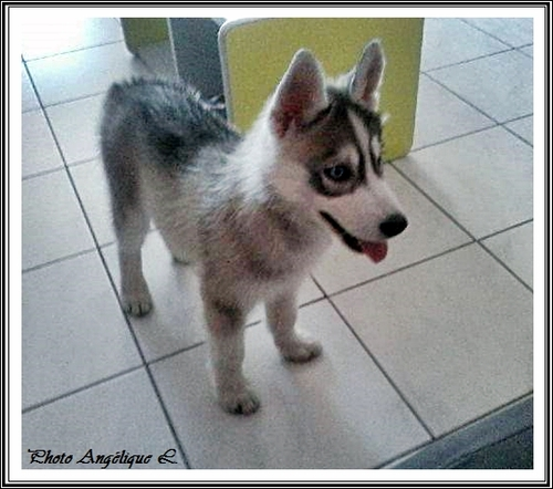 Jeska (2,5 mois)