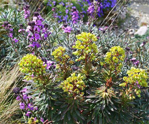 Euphorbia, sarracenia et compagnie.