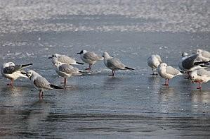 lac gelé -24-