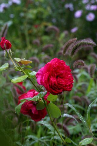 Roseraie - Septembre (2/4)
