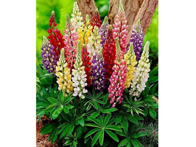 de belles plantes pour rendre votre journée plus agréable