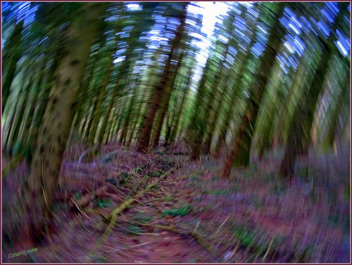 L'enrésinement de nos forêts en cataclysme apocalyptique