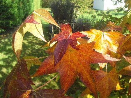 Douceur de l'automne