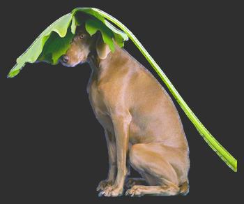 Petits Tubes animaux pour montages chien